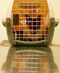 Transport zwierząt w powietrze zasad i zaleceń