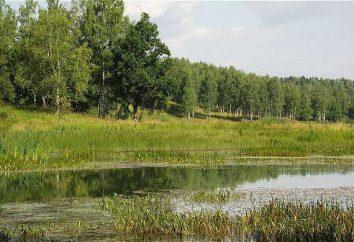 Wo im Sommer schwimmen? Flüsse und Seen in der Nähe von Moskau