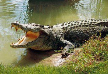 Quanti denti di un coccodrillo? E altri fatti interessanti