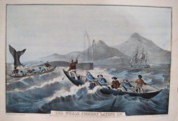 Nowoczesne wielorybniczy: opis, historia i bezpieczeństwo