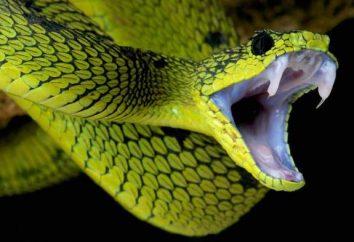Un nido de víboras. Cómo vivir y poner huevos las serpientes?