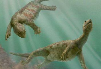 To wygląda jak żółw bez skorupy: opis, charakterystyka i ciekawostki