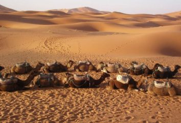 La caractéristique du désert d'Arabie, et où sont-ils?