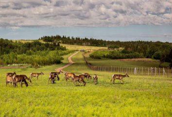 """Das Erholungszentrum """"Deer Zastava"""" (Perm) lädt für ein neues Leben"""