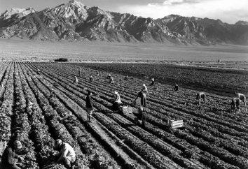 A escravidão nos Estados Unidos: um caminho espinhoso para a democracia