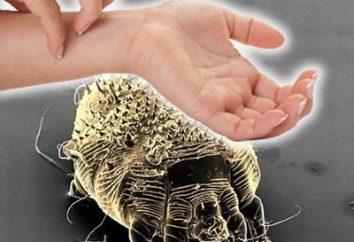 Leczenie świerzbu u ludzi: leczenie pierwszych objawów infekcji ścieżce. Maść na świerzb