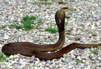 Traumdeutung: eine Schlange hatte einen Traum. Was ist der Traum?