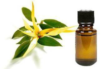 l'huile de camphre: des instructions pour l'utilisation et la rétroaction