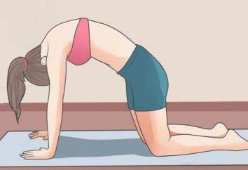 Stretching pour le dos: exercices de base