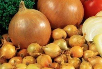 Plantar conjunto cebola e cuidados