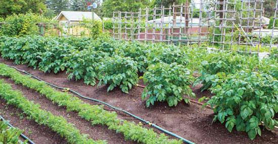Irrigazione automatica nella serra con le mani fuori di for Irrigazione serra