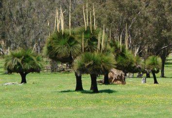 Plantes de l'Australie – pays endémiques de la beauté de la partie continentale