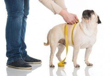 Jak wybrać dobrą dietę dla psów sterylizowanych