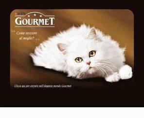 gourmet para os gatos – um deleite para pet