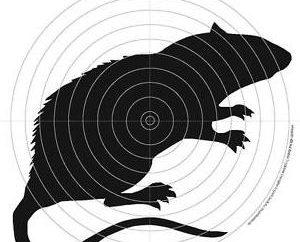 Różnorodność gatunków i rodzajów Strzelectwa wiatrówkę
