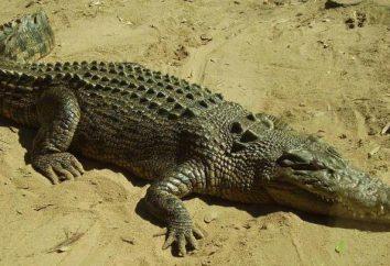"""""""lágrimas de cocodrilo"""": valor Fraseologismo, historia y ejemplos"""