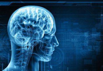 Psicofisiologia – che cosa è questo? Età fisiologia e psicofisiologia