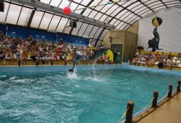 Rostov Delphinarium für die Gäste warten!