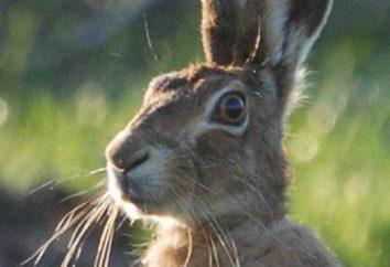 Enredos sobre animais selvagens como uma oportunidade de lembrá-los
