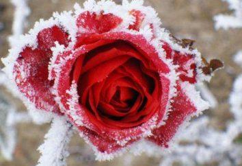 materiale di copertura per le rose in inverno: una panoramica, caratteristiche, opinioni e recensioni