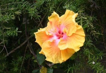 ¿Cuál es la flora? Aprendemos!