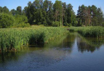 """Country Club """"invejável"""": a pesca (pago) em Moscou"""