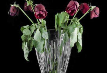 Cómo reactivar las rosas y mantener el ramo fresco durante mucho tiempo