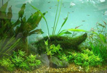 Nous discutons des plantes pour aquarium