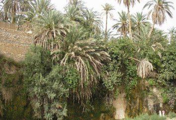Paese Tunisia. Recensioni e la scelta di hotel