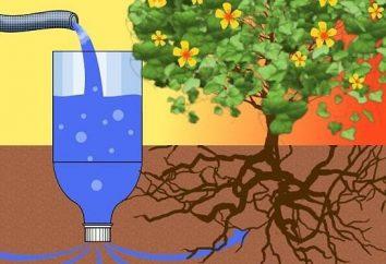 Chalet Tricks et plus: comment organiser irrigation goutte à goutte de bouteilles en plastique avec leurs propres mains