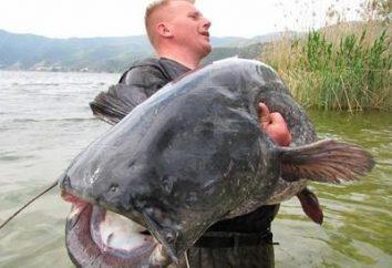 Pesca: em que catfish estão mordendo e onde pegá-lo?