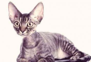 Kot, który nie znikną. rodzaje skał
