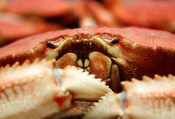 Dlaczego sen kraby? Podróż do morza lub innych wydarzeń?
