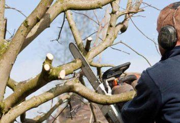 mastice giardinaggio per gli alberi: descrizione, tipi, applicazione. Come fare uno stucco giardino?