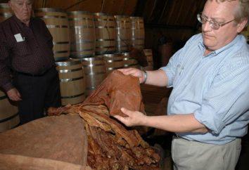 Comment la fermentation du tabac à la maison?