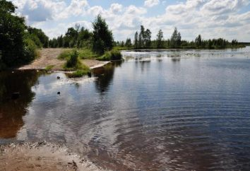 Voloyarvi – lac dans la région de Leningrad. Description, pêche, photo