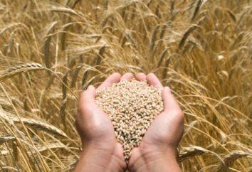 désinfectants de semences: tout sur le médicament et ses effets