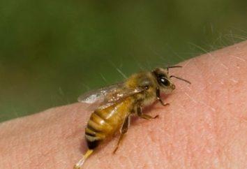 Was, wenn ein Bienenstich zu tun? Erste Hilfe