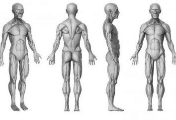 """¿Cuál es la diferencia del individuo del individuo? El concepto de """"persona"""", """"individualidad"""""""