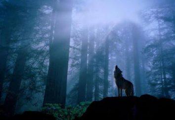 A parábola sobre o lobo: 3 histórias