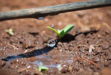 Irrigation – ce que cela signifie? Avantages terres d'irrigation