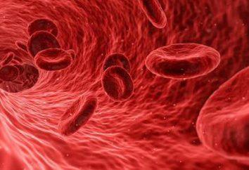 Qual è il ruolo del ferro nel corpo umano?