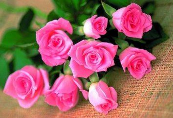 Wartość koloru róż, czyli jak wybrać odpowiedni prezent