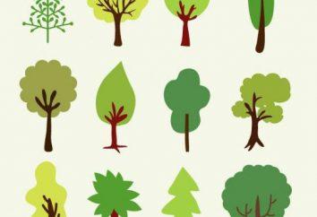 enigma interessante sobre uma árvore