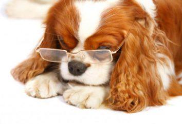 """""""Diamond eyes"""": gouttes pour chats et chiens (instruction)"""