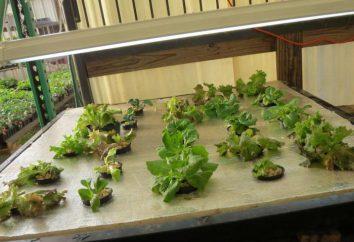 Hydroponika własnoręcznie dla ogórków i pomidorów. Sprzęt do uprawy warzyw