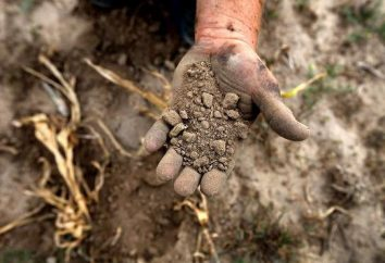 Concimi organici: tipi e le loro caratteristiche. L'uso di fertilizzanti organici