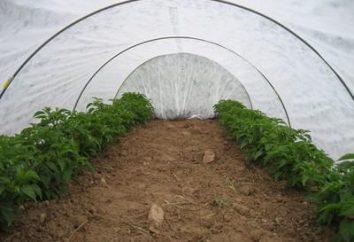 """Greenhouse """"Snowdrop"""": opinie klientów"""