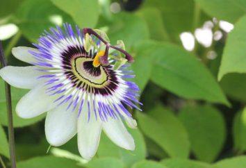 Blue Passion: la culture et les soins