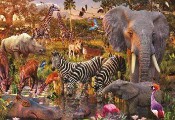 categoría sistemática de los animales: los taxones principal y principios de clasificación
